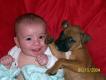a baby and a boxer puppy