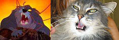 comparing a real cat to Dragon from The Secret of Nimh